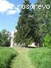 Ель сибирская (Picea obovata  Ledeb. )