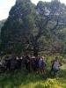 Можжевельник обыкновенный (Juniperus communis L.)