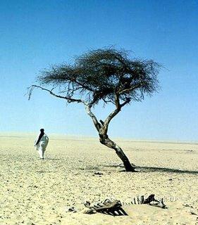 Дерево Тенере