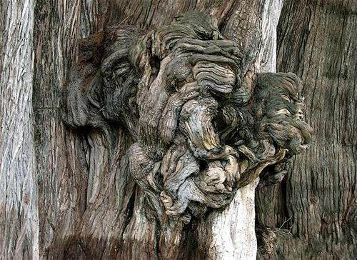 Знаменитые деревья