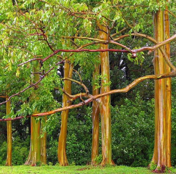 Самые уникальные деревья в природе